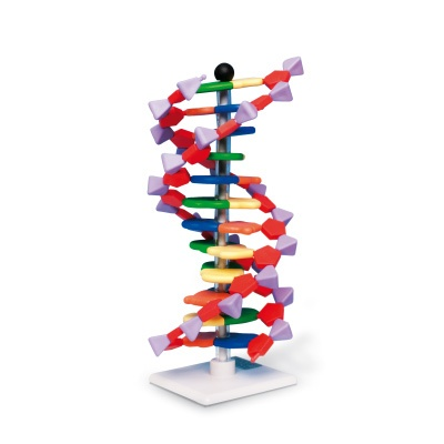 Verbessertes miniDNA™ Modell (12 Segmente)