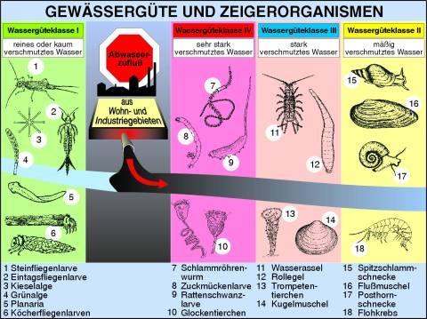 Transparentsatz Gewässergüte und Zeigerorganismen