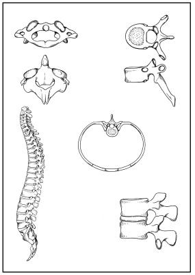 Skizzenblätter Biologie des Menschen, Gesamtausgabe Teil I bis IV, Lehrerexemplar